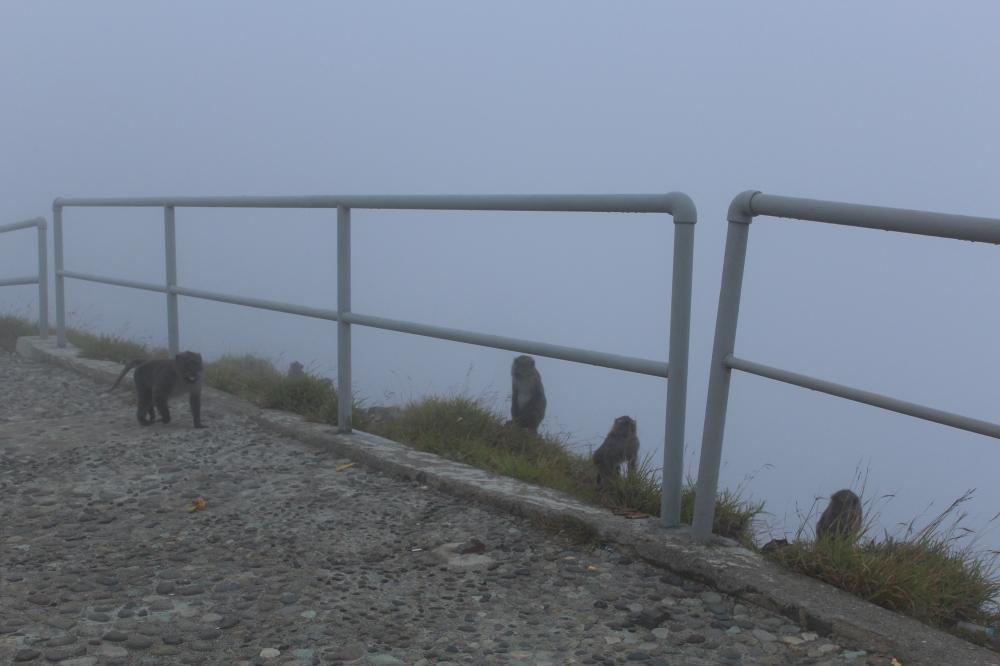 Pagar pembatas area danau yang tertutup kabut
