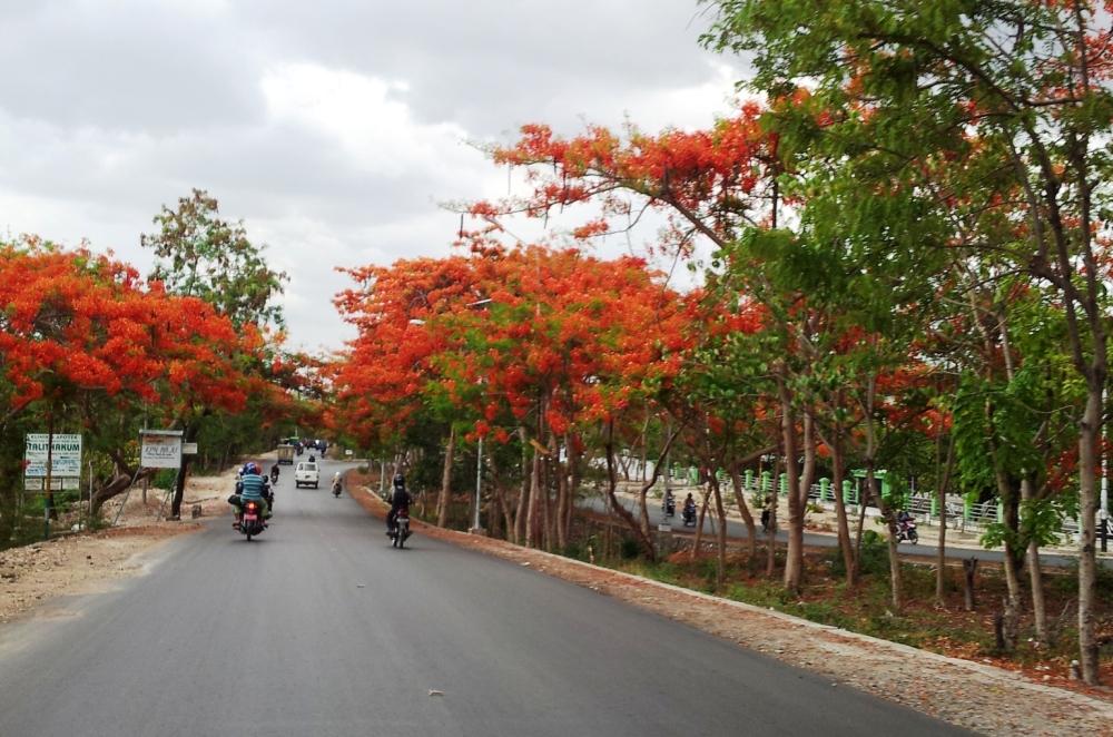 Kayak gak lagi di Indonesia Timur! Indah banget nih jalanan kota Kupang yang bersih dan rindang